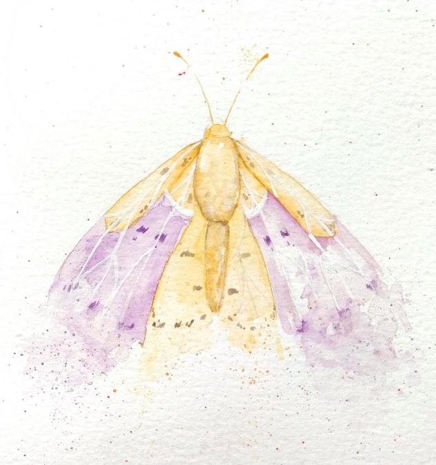 mariposa acuarela-carla bonfigli